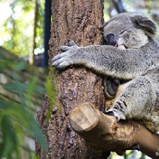 Image source: Animal Planet